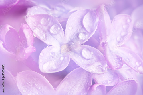Fotobehang Lilac floral background with a dewy lilac