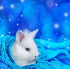 little cute white rabbit in a soft scarf - winter