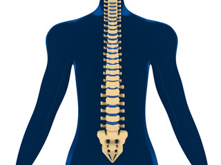 Back Pain, Spine, Backache