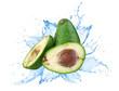 Avocado with water splash