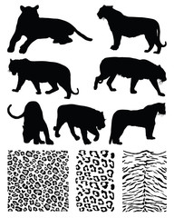 Silhouettes  of tigers and illustration of skins, vector
