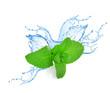 Mint leafs water splash - 55631734