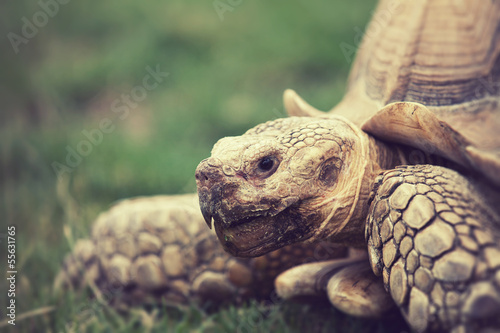tortoise close up