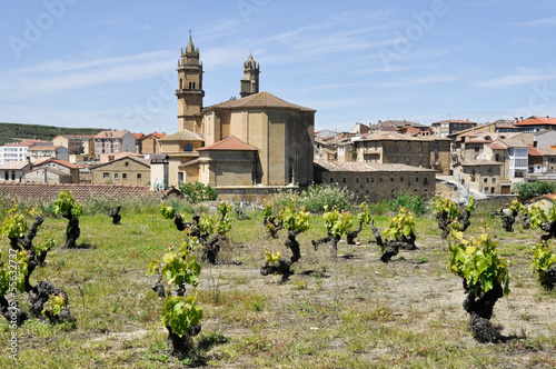 Vineyard and town of Elciego, Rioja Alavesa (Spain)