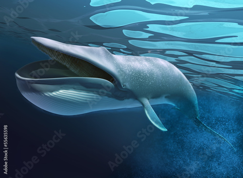 Whale under water swimming.