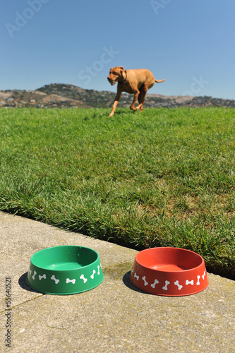 Two dog water bowls with hound and grass