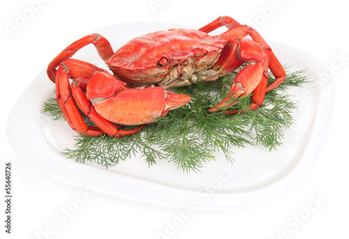 Boiled crab on white plate, isolated on white