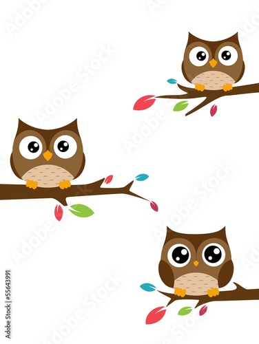Family of owls sat on a tree branch