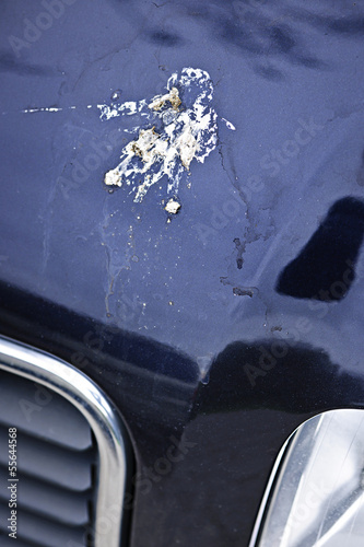 Bird droppings on car hood