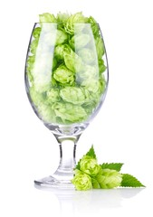 goblet with hop cones and leaves isolated on white background