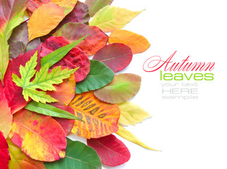 Colorful autumn leaves on white background with sample text