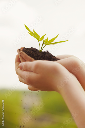 boy hands holding young plant
