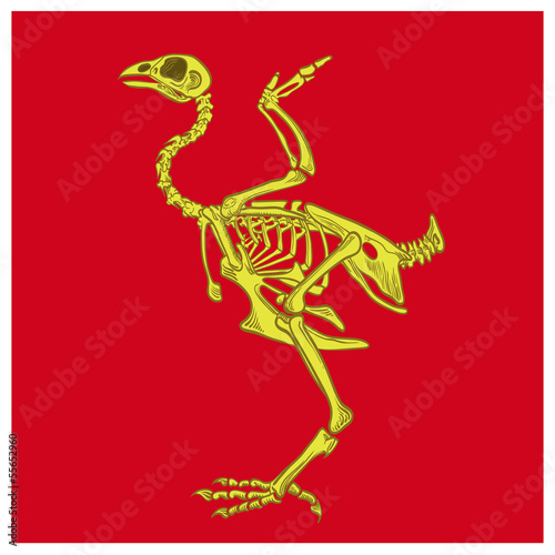 skeleton birds