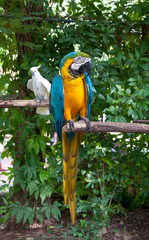 Parrot macaw beautiful colors in safari.