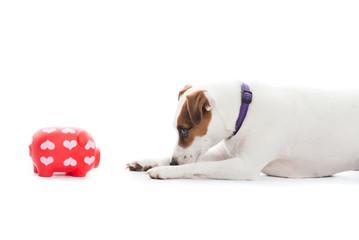 Hund und Sparschwein