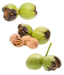 Circassian walnut isolated on white background close up