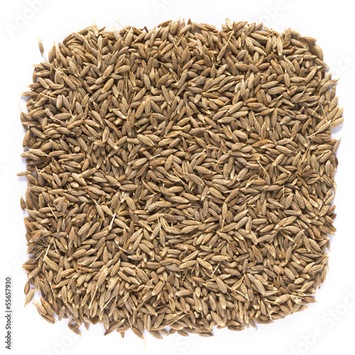 Cumin on white background