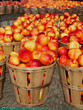 Nectarines in Bushels