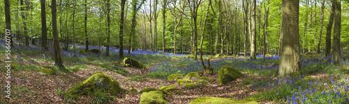 Keuken foto achterwand Bossen Magical forest and wild bluebell flowers