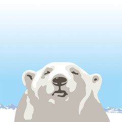Northern polar bear
