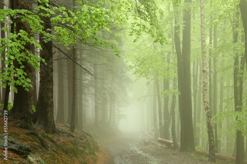 Fotobehang Bos in mist Path through the forest in the early spring during rainfall