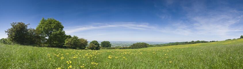 Buttercup field, rural landscape