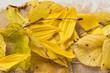 Herbstblätterfarben Dekoration