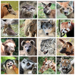 Animal mammals collage