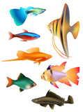set of aquarium fishes