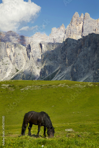 A horse grazing in high mountain meadow