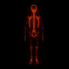 Skeleton X-rays isolated on black