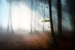 Mystic fantasy fog into the forest - 55675112