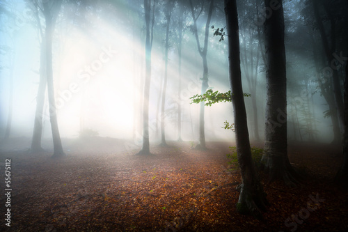 Tuinposter Bossen Mystic fantasy fog into the forest