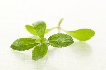 Stevia sugar leaf.