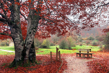 bench in park on autumn