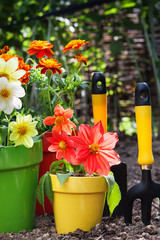 flower in pots with gardening tools