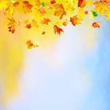 Autumn background with falling maple leaves and copy space