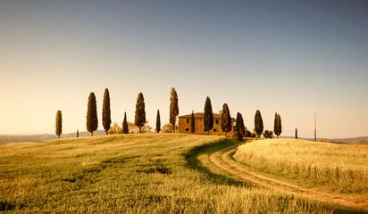 Campo di Grano e Cipressi, Toscana