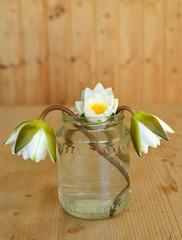 Seerosen im Glas
