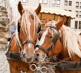 Team of horse