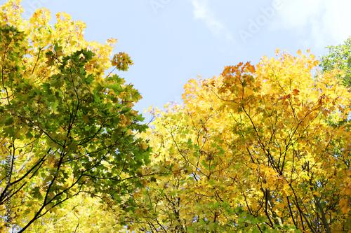 Fototapeten,wald,herbst,leaf,abstrakt