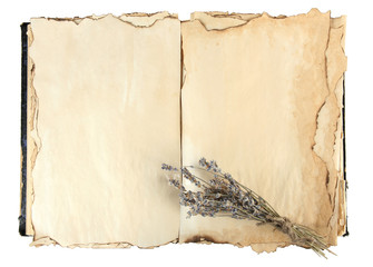 Open old book and lavander isolated on white