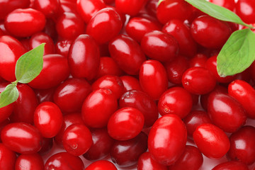Fresh cornel berries, close up