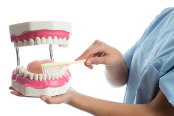 Zahnärtin zeigt Zahnpflege