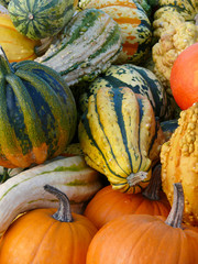 Pumpkins and Gourd Harvest II
