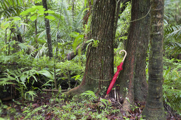 Red umbrella leaning against tree in rainforest
