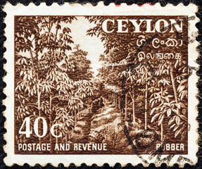 Rubber plantation (Ceylon 1951)