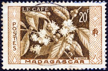 Coffee (Madagascar 1956)