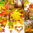 Colorful autumn collage