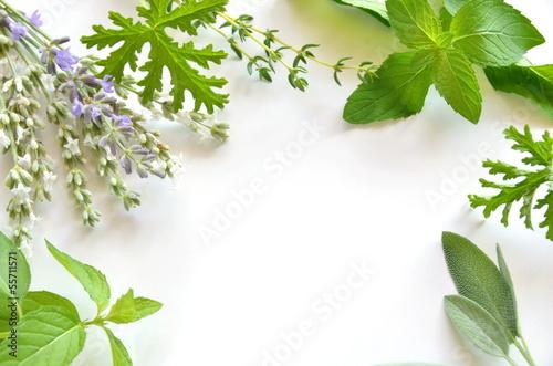 herbal frame